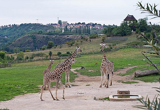 Акция чешского зоопарка для высоких людей